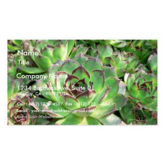 Succulents Tarjeta De Visita