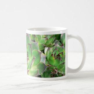 Succulents Taza Clásica