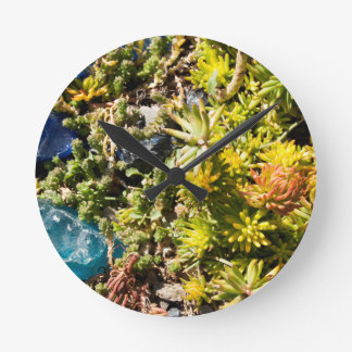 Succulents with Blue Glass Round Wallclocks