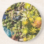 Succulents with Blue Glass Drink Coaster