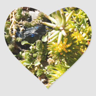Succulents with Blue Glass Heart Sticker