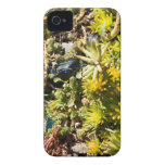 Succulents with Blue Glass iPhone 4 Case-Mate Case