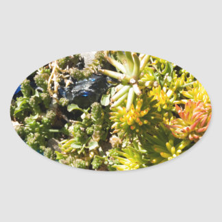 Succulents with Blue Glass Stickers