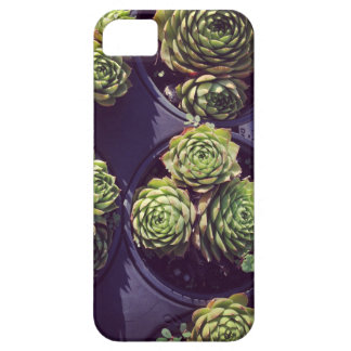 Succulicious hen and chicks iPhone 5 case