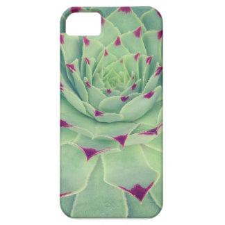 Succulicious succulent iPhone SE/5/5s case