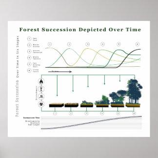 Sucesión ecológica del bosque en un cierto plazo póster
