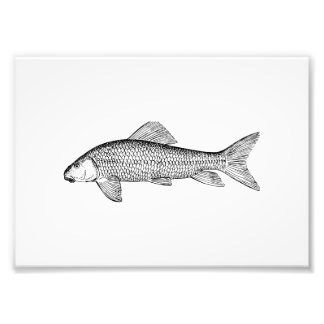 Sucker Fish Art Photo Print