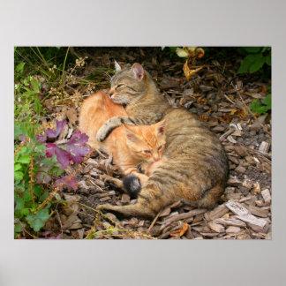 Suckling Ginger Cat Poster