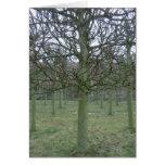 Sudbury Hall Orchard in Winter Card