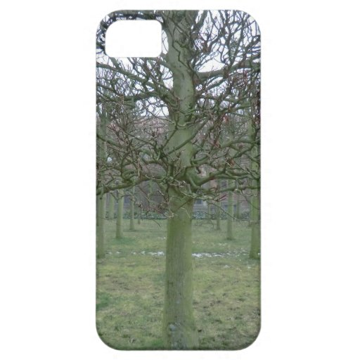 Sudbury Hall Orchard in Winter iPhone 5 Cover