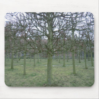 Sudbury Hall Orchard in Winter Mouse Pad
