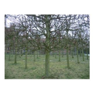 Sudbury Hall Orchard in Winter Postcard