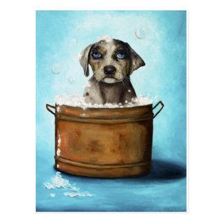 Suds del perro n postales
