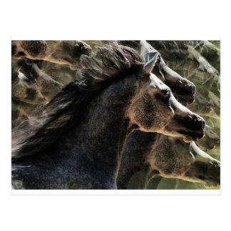 Sueño con caballos tarjetas postales