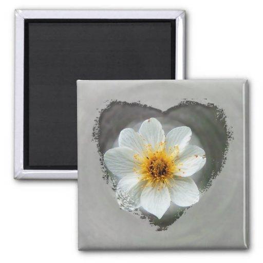 Sueño de la flor blanca; Ningún texto Imán De Frigorifico