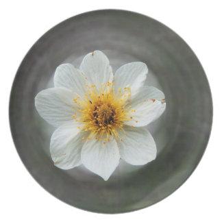 Sueño de la flor blanca; Ningún texto Plato De Comida