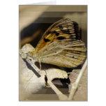 Sueño de la mariposa tarjeton