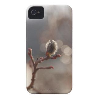 Sueño de los CDR Catkin iPhone 4 Protector
