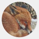 Sueño del día del Fox Pegatinas Redondas