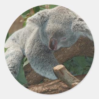 Sueño del peluche de Australia del oso de koala Pegatina Redonda