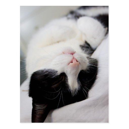 Sueño lindo de la cara del tomcat del gato el postales