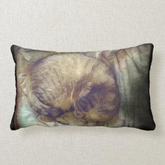 Sueño rescatado del gato de la sabana almohada