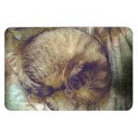 Sueño rescatado del gato de la sabana imanes rectangulares