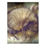 Sueño rescatado del gato de la sabana postales