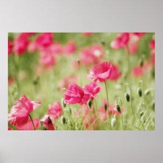 Sueño rosa de flor poster
