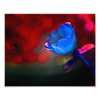 Sueños coloridos de una flor cojinete