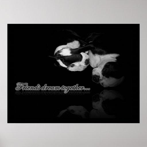 Sueños de Boston Terrier - impresión Póster