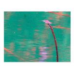 Sueños de la libélula postales