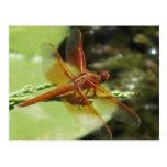 Sueños de la libélula tarjeta postal