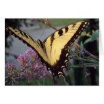 Sueños de la mariposa felicitación