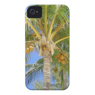 Sueños de la palmera funda para iPhone 4 de Case-Mate
