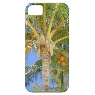 Sueños de la palmera funda para iPhone SE/5/5s