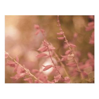 Sueños de la primavera tarjeta postal
