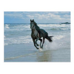 Sueños del caballo salvaje postal