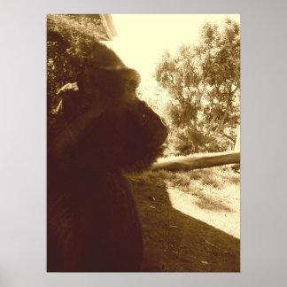 Sueños del gorila póster