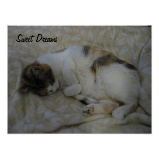 Sueños Gato-Dulces el dormir Póster