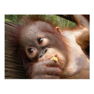 Sueños lindos del orangután del bebé de la mamá postal