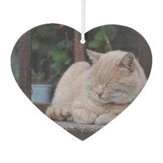Sueños rubios peludos del gato