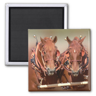 Suffolk Punch Draft Horse 2 Inch Square Magnet
