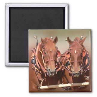 Suffolk Punch Draft Horse Magnet