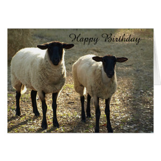 Suffolk Sheep Happy Birthday From Us to Ewe! Card