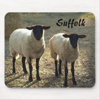 Suffolk Sheep Late Day Sunshine Barnyard Pasture Mouse Pad