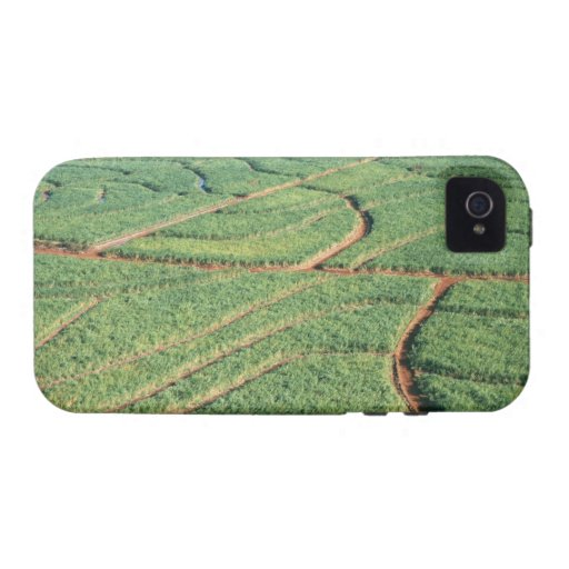 Sugar Cane Field Case For The iPhone 4
