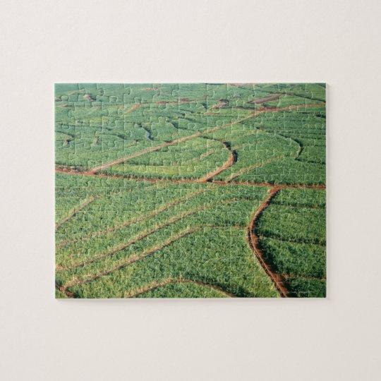 Sugar Cane Field Jigsaw Puzzle