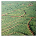 Sugar Cane Field Large Square Tile