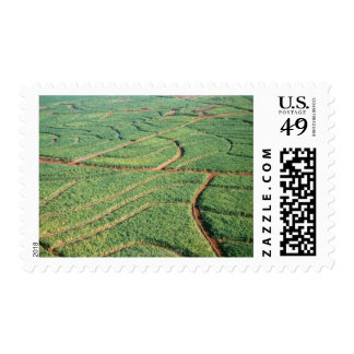 Sugar Cane Field Postage